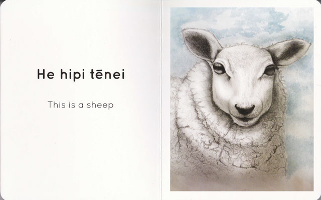 Kararehi-sheep-1-web